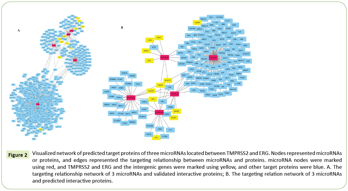 Molecular-Cellular-Biochemistry-Visualized-network