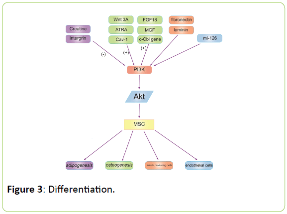 british-biomedical-bulletin-Differentiation
