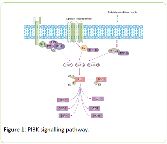 british-biomedical-bulletin-signalling-pathway