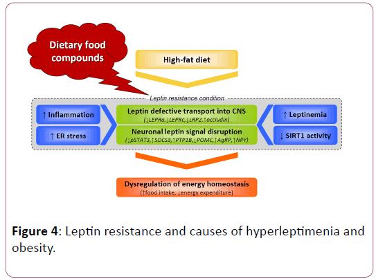childhood-obesity-hyperleptimenia