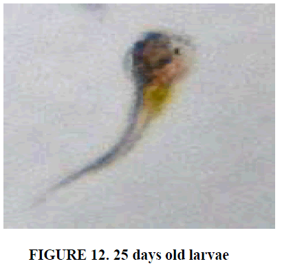 european-journal-of-experimental-biology-old-larva