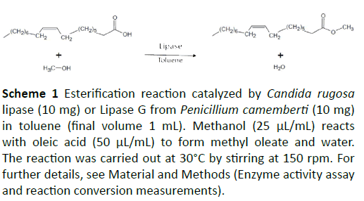 insights-enzyme-research-Esterification-reaction