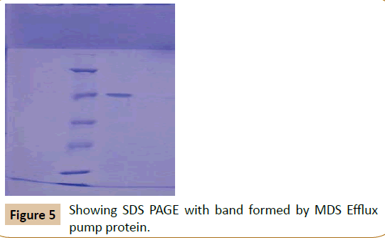 pharmaceutical-biotechnology-Efflux-pump-protein