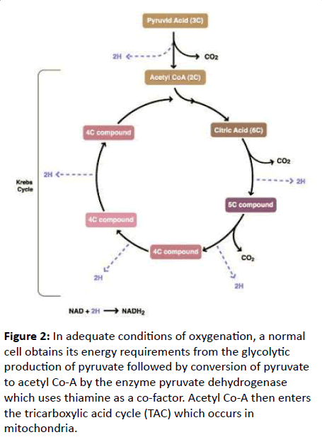 renal-medicine-alanine-glycolytic-production