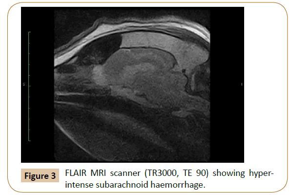 veterinary-medicine-surgery-hyperintense-subarachnoid-haemorrhage